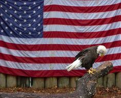 American Flag and Bald Eagle I Love America, God Bless America, America 2, American Pride, American Flag, American Soldiers, American Freedom, American History, Patriotic Pictures