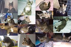 Sally's collage