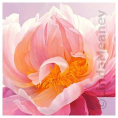 This Pink Peony Painting is gorgeous!  #beautiful_flowers #art #oil_painting