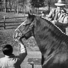 The Famous Budweiser Clydesdale Horses became a symbol of the Anheuser-Busch Brewing Company over 75 years ago. In April 1933, August A. Busch, Jr. presented his father, August A. Busch, Sr. with a team of six matching Clydesdale Horses pulling a red, white and gold beer wagon