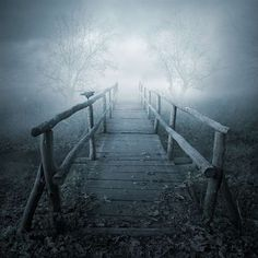 Many paths in my life cross unusual bridges to mysterious but wonderful places.