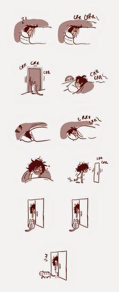 : Gatos...