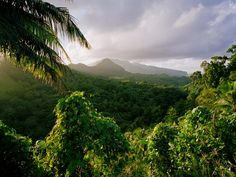 Tropical Rainforest, Dominica