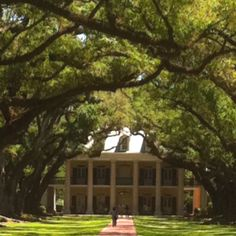 Oak Alley Plantation near New Orleans. Great trip. Great tour.