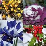 Jaký růst v zimě |  37 Rostliny ideální pro zimní zahradnictví