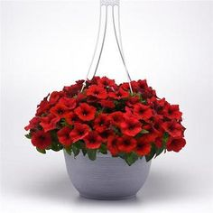 Check out the deal on Petunia E3 Easy Wave Red 10 seeds at Hazzard's Home Gardener Easy Waves, Petunias, Planter Pots, Seeds, Seasons, Flowers, Plants, Check, Seasons Of The Year