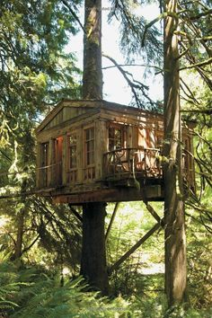 Be in a Treehouse: Pete Nelson