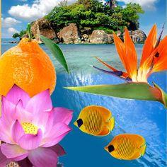 Paradise Reef Wax Tarts