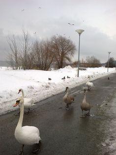 Walking Birds by Eva Tenter (in Estonia)