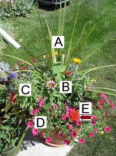 Container Plants (lots of ideas) A=Cordyline B=Gazania C=Salvia D=Calibrachoa E=Verbena