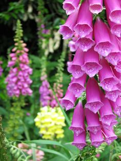 foxgloves flowers | Bee-Friendly Plants & Flowers - Described By Season | Talking With ...