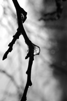 Abstract Black and White Art Photography. Water droplet frozen in time on a tree branch.