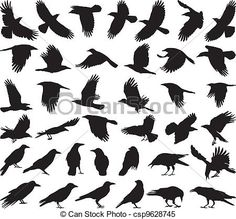 Illustration of black isolated vector silhouettes of carrion crow on the white background vector art, clipart and stock vectors. Silhouette Tattoos, Crow Silhouette, Silhouette Drawings, Crow Art, Raven Art, Black Crow Tattoos, Black Bird Tattoo, Tattoo Bird, Corvo Tattoo