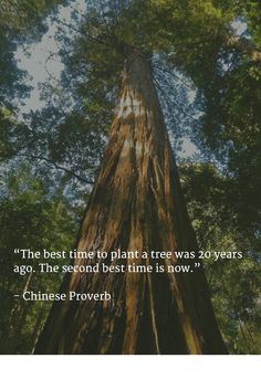 """""""The best time to plant a tree was 20 years ago. The second best time is now.""""   - Chinese Proverb   #doitnow"""