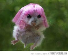 Hamster Minaj