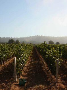 Daylesford Organic - chateau leoube, best rose wine around