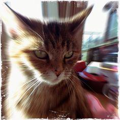 (1) #cats Mous