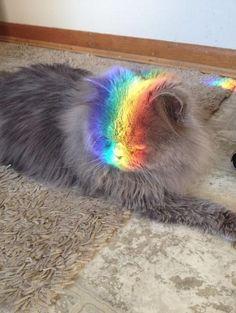 Rainbow Cat - Neatorama