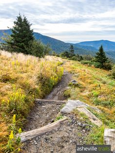Hike the Appalachian Trail at Roan Mountain, trailing the Roan Highlands from Carvers Gap to Grassy Ridge