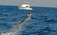 How to White Marlin Fishing Ocean City Maryland