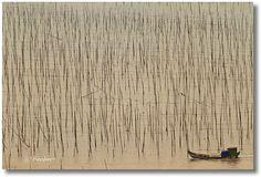 A boat amongst the stilts for drying seaweed, Xiapu, Fujian by fish-bone, via Flickr
