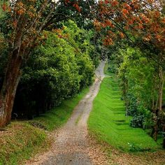 Banaran, Central Java, INDONESIA  #paths #pathway #forest #road #nature #indonesia