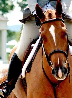 Hunter, Horse Show
