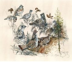 New Cool Bird Houses Website Ideas Hunting Art, Hunting Gifts, Watercolor Print, Watercolor Paper, Cool Bird Houses, Grouse Hunting, Wild Forest, Deer Art, Sign Printing