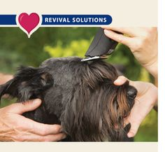 Lessons from a real groomer your workstation brushes combs dog clipper blades chart very handy info for dog grooming solutioingenieria Choice Image