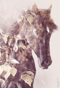creative double exposure: wonderful and majestic horse ---------------------------------------- Kreative Doppelbelichtung mit Photoshop, mit Tutorial