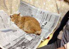PetsLady's Pick: Cute Newspaper Nap Of The Day  ... see more at PetsLady.com ... The FUN site for Animal Lovers