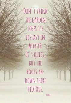 Don't think the garden loses its ecstasy in the winter. It's quiet, but the roots down there are riotous. - Rumi