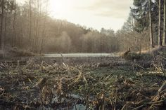 EDEN LAKE by SadedisticzGraphix on 500px