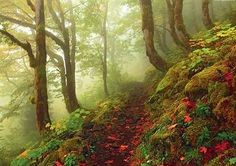 Path is a 1000 piece jigsaw puzzle by Heye Puzzles featuring a misty forest pathway with autumn leaves on the ground. Forest Path, Forest Theme, Magic Forest, Image Nature, Nature Images, Nature Photos, Beautiful Nature Wallpaper Hd, Beautiful Nature Pictures, Beautiful Space