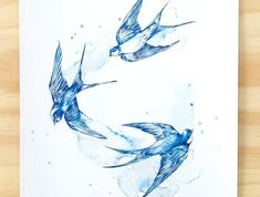 Blue Swallows bird print A4 - Contemporary art print of pencil and watercolour drawing