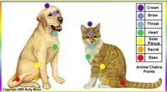 Dog/cat chakra healing