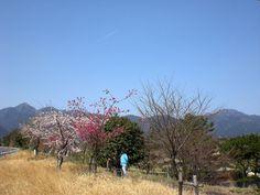 菰野町菰野地区  菰野町庁舎から三滝川を挟んで南側に位置する所  平成24年4月2日撮影