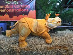 Rhino - pumpkin sculpture
