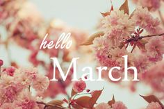 Hello March New Month Blossom Flower Seasons Of The Year