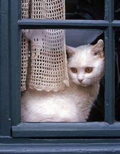.Sad kitty
