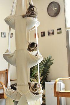 Hängematten für die Katzen