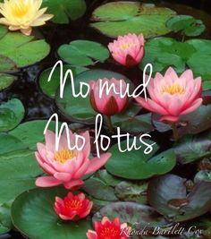 No mud, no lotus. I think I'm a lotus!