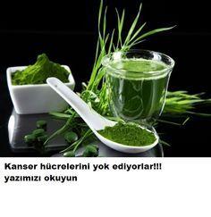 """KANSER HÜCRELERİNİ YOK EDİYORLAR"""""""