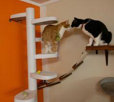 Bryan and Tonks at Barista Cat Cafe,  Auckland NZ