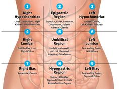 Abdominal pain can have a wide range of causes. Understanding the nine regions and four quadrants of your abdomen can help pinpoint possible origins and identify associated ailments. Nursing School Notes, Medical School, Nursing Schools, Human Anatomy And Physiology, Anatomy Organs, Medical Anatomy, Nursing Tips, Nursing Planner, Nursing Cheat Sheet