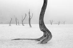""".a bruma da Namíbia: Como uma paisagem fantasmagórica inverno visto a partir das fotos de Marsel van Oosten. O tiro Dutchman mortos árvores camelo espinho no Parque Nacional Naukluft em preto e branco e ganhou na categoria """"Terra, Ar, Fogo, Água"""". """"Só muito raramente aqui é fog"""", diz o fotógrafo de natureza """", então eu tive que esperar anos por esta oportunidade."""" Fonte de inspiração para o fotógrafo são imagens da paisagem pintor alemão Caspar David Friedrich."""
