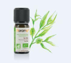 Florame Huile essentielle de Tea-tree bio ou Arbre à thé - les- huiles-essentielles-bio
