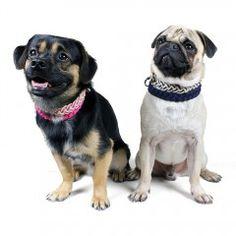 Geflochtene Hundehalsbänder Sailor in vier knalligen Farben.