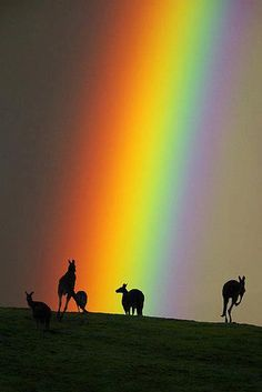 There are kangaroos at the end of a rainbow? Who knew? ;)    Australia