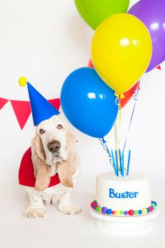 Buster's Birthday - willcookforshoes.ca looks like Grumpy Cat has some competition :p